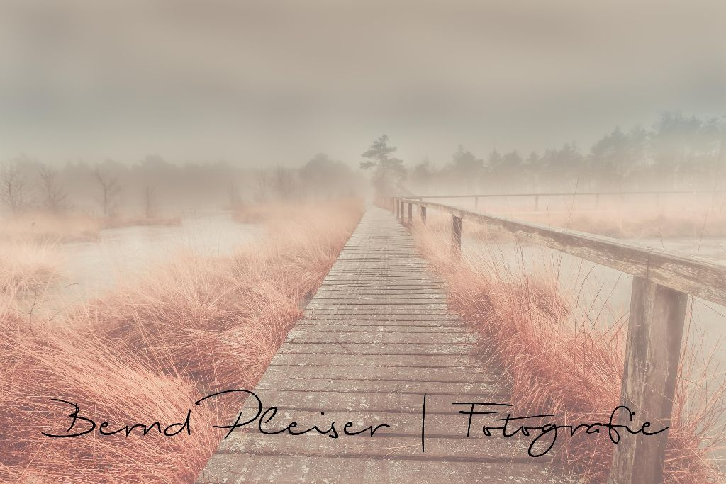Das Moor im Nebel