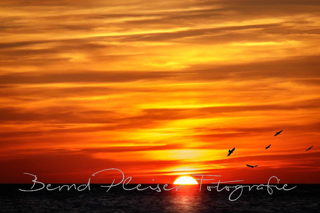 Sonnenuntergang auf dem Darss