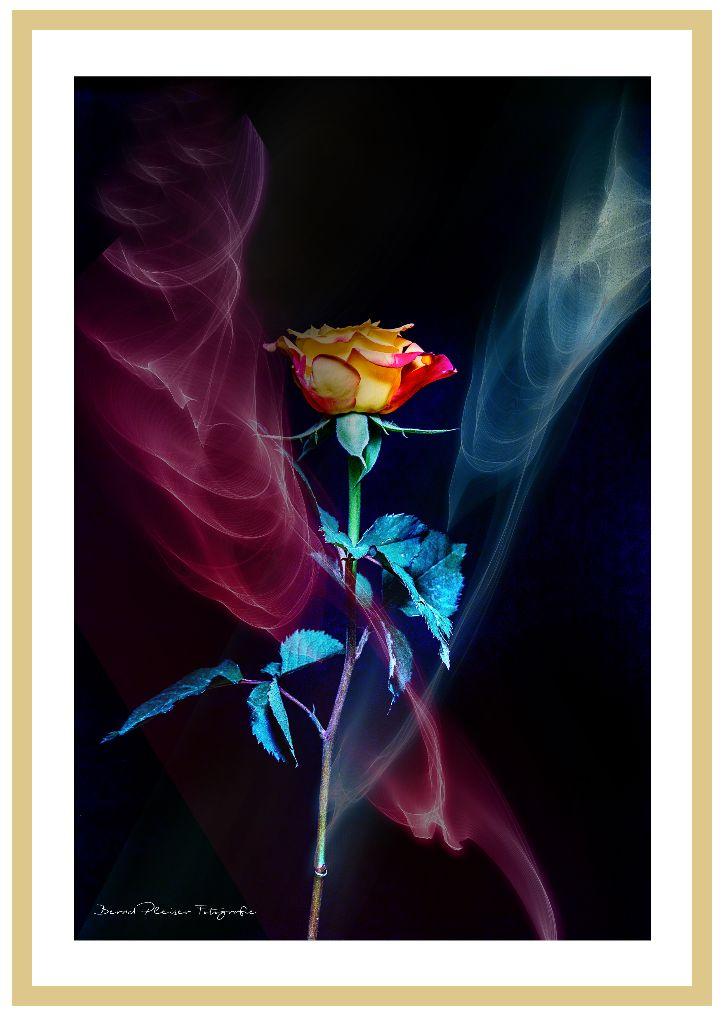 Rose mit Rauch